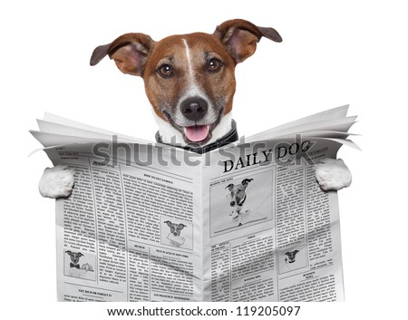 dog reading and holding a  newspaper - stock photo