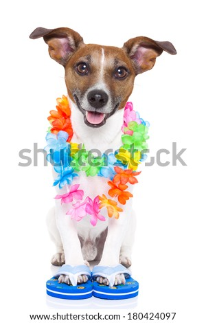dog ready to go for summer holidays right now - stock photo