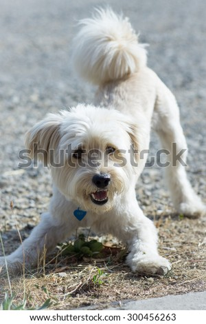 Dog ready to play - stock photo