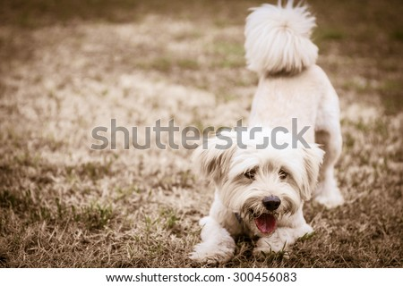 Dog ready to play: black and white - stock photo