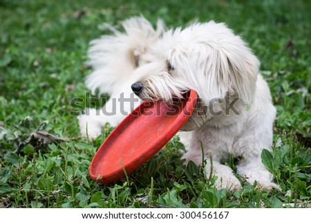 Dog relaxing with his red disk - stock photo