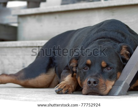 Dog resting by the door steps with a sad face - stock photo
