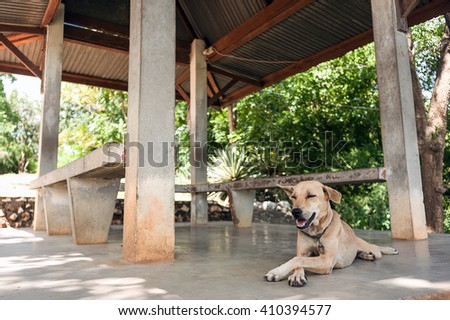 dog resting in the shade, put a paw - stock photo