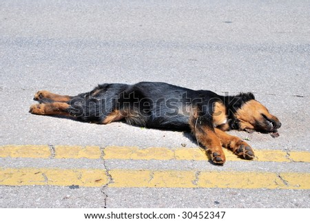 Dog Road Kill - stock photo