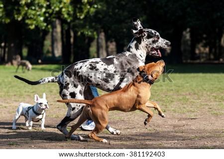 Dog run in the park - stock photo