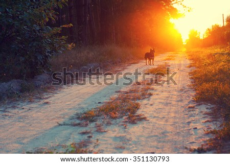 Dog running in the countryside - stock photo