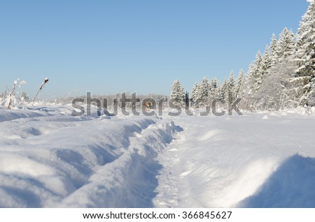 dog running on the road in winter field - stock photo