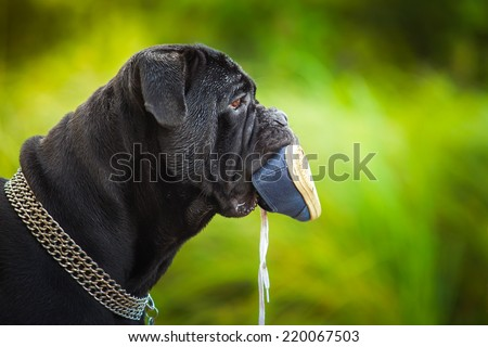 dog runs floats moving in the open air - stock photo