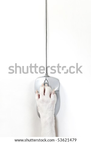Dog's foot and computer mouse - stock photo