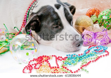 Dog Sick after too much partying - stock photo