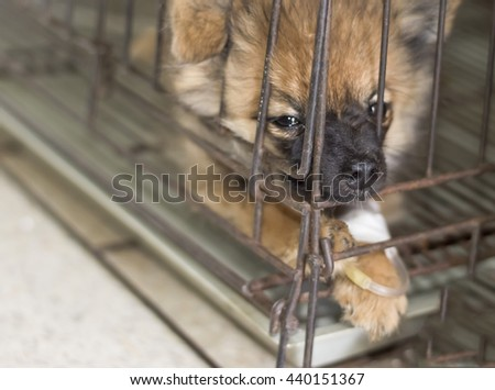 dog sick in cage selective focus on nose - stock photo