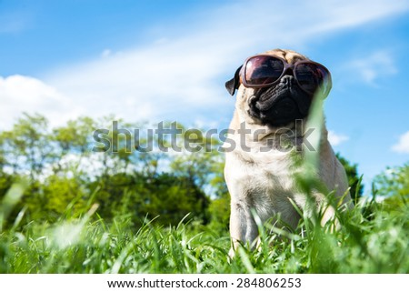 Dog sitting in nature in sunglasses - stock photo
