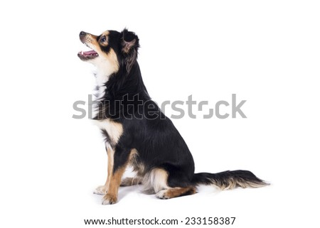 Dog sitting looking left side with tongue out - stock photo