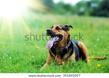 Dog sitting on green grass - stock photo