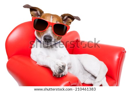 dog sitting on red sofa relaxing and resting while chilling out - stock photo