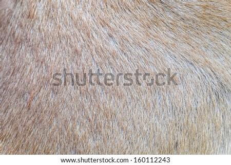 dog skin - stock photo