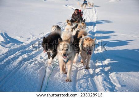Dog sledding tour in Tasiilaq, Greenland - stock photo