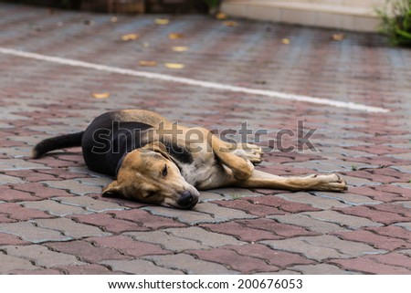 Dog Sleeping On Pedestrian - stock photo