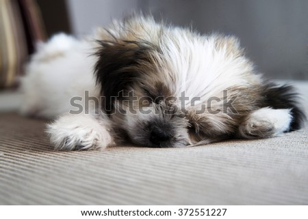 dog slleeping - stock photo