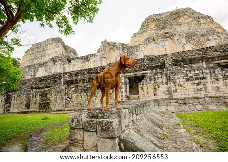 dog standing in ancient Mayan ruins - stock photo
