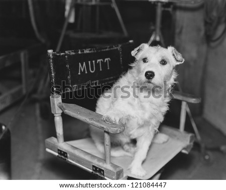 Dog star - stock photo