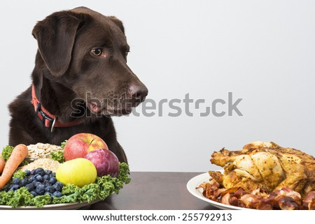 Dog staring at meat products - stock photo