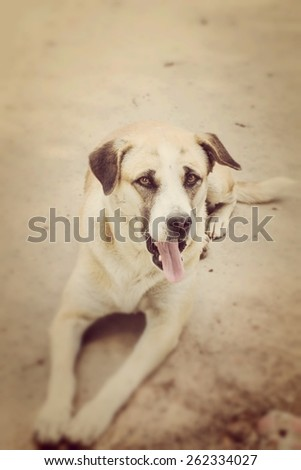 Dog staring in the camera - shallow depth of field - stock photo