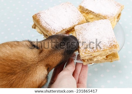Dog stealing a cake - stock photo