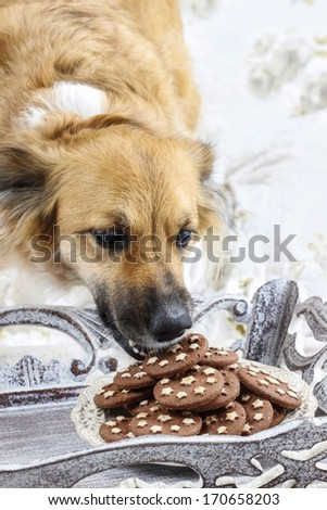 Dog stealing a cookie. - stock photo