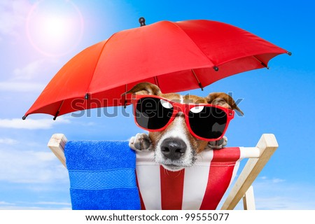 dog sunbathing on a deck chair - stock photo