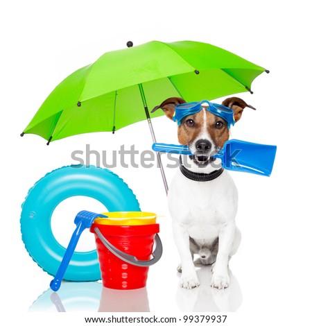 dog sunbathing with air mattress - stock photo