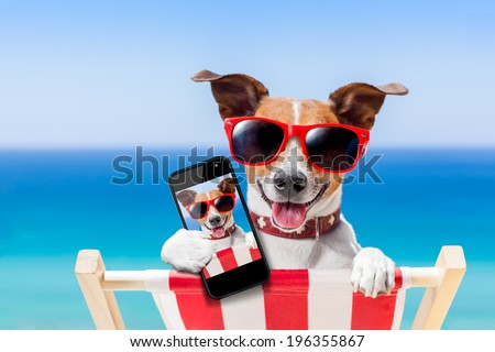 dog taking a selfie in summer holidays - stock photo