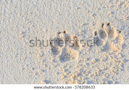 dog track foot print on sand beach - stock photo