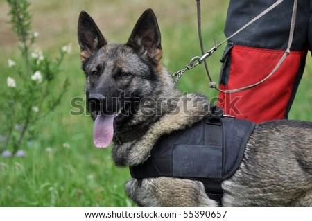dog training - stock photo