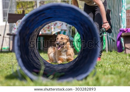 dog training, school for dogs  - stock photo