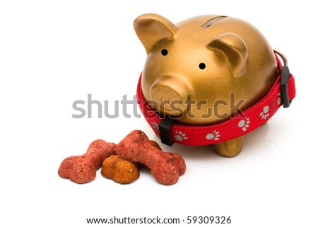 Dog treats with piggy bank isolated on a white background, Costs of dog food - stock photo