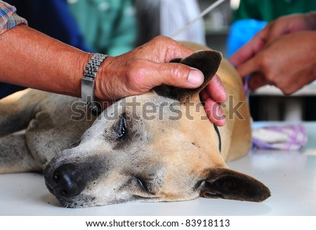 dog under anesthetic - stock photo