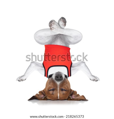 dog upside down relaxing with closed eyes doing yoga and balancing, isolated on white background - stock photo