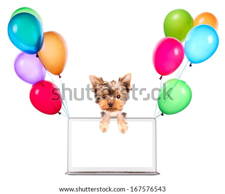 dog using a computer laptop with empty screen and air balloons - stock photo