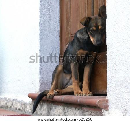 Dog Waiting - stock photo