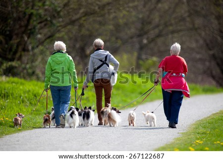 dog walkers in the park with many little dogs - stock photo