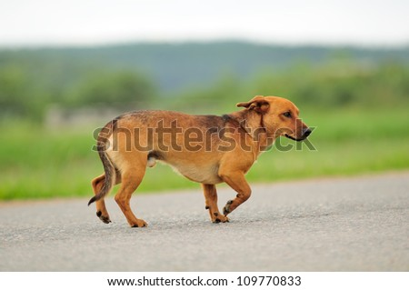 Dog Walking Down the Road - stock photo