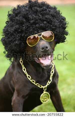 Dog wearing funny costume - stock photo
