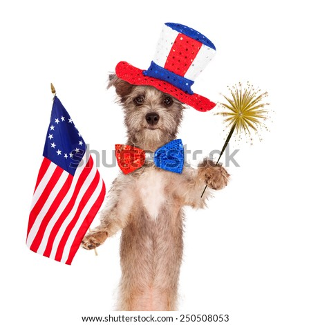Dog wearing Independence Day hat and tie holding a bicentennial American flag and sparkler - stock photo