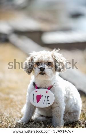 Dog wearing love sign - stock photo