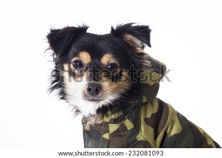 Dog wearing military jersey looking camera - stock photo