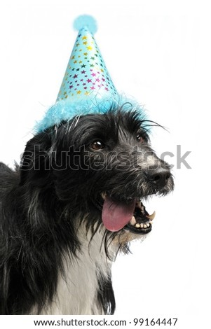 Dog wearing party cone, isolated - stock photo
