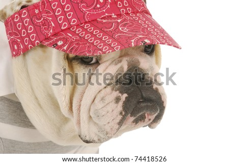 dog wearing sun hat - english bulldog wearing red hat on white background - stock photo