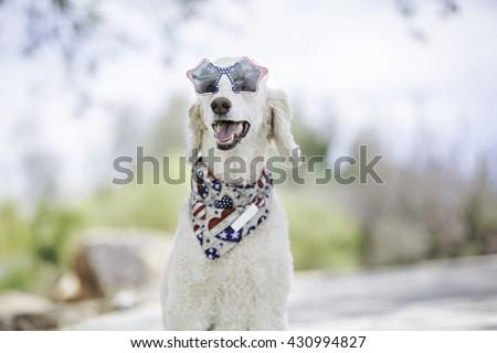 Dog wearing USA sunglasses and patriotic bandana - stock photo