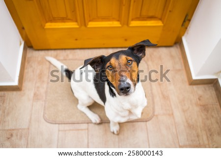 dog welcome home  - stock photo